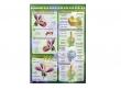 - Budowa kwiatu-plansza dydaktyczna