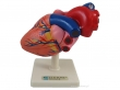 Heart model of real dimension
