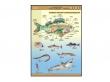 - Ryby-plansza dydaktyczna