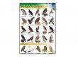 - Ptaki drapieżne-plansza dydaktyczna