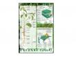 - Fotosynteza-plansza dydaktyczna