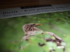 - Bielik-Król polskich ptaków.